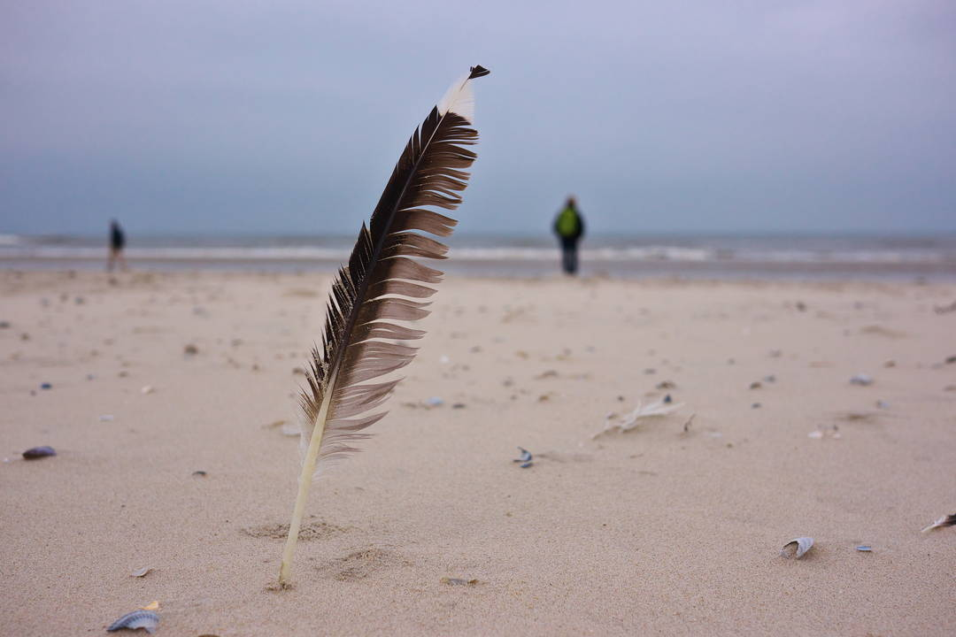 Eine Vogelfeder am Nordseestrand von Juist